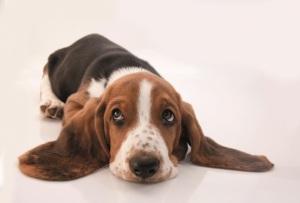 puppy-dog-eyes-hush-puppy-1_660