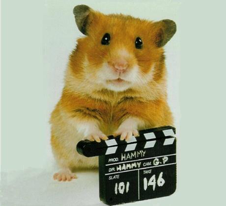 hammy-hamster.jpg